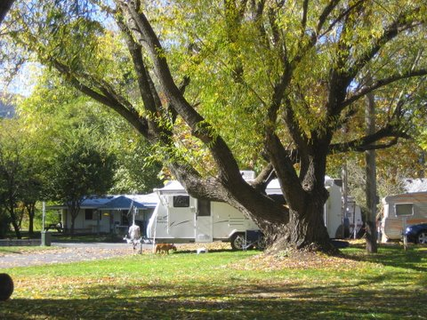 Tumbarumba Creek Caravan Park - St Kilda Accommodation