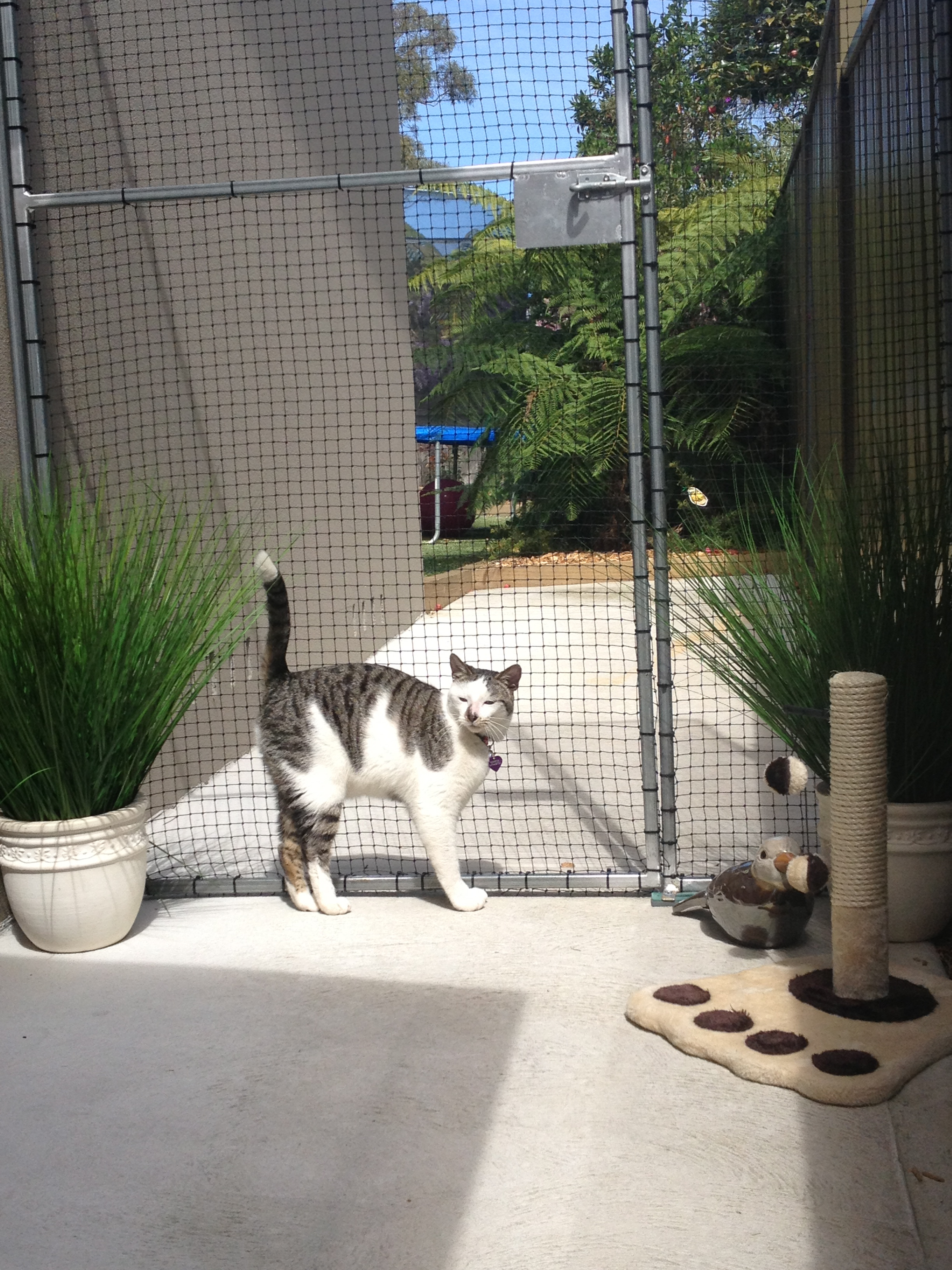 Caringbah Cat Hotel - St Kilda Accommodation