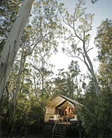 Paperbark Camp - St Kilda Accommodation
