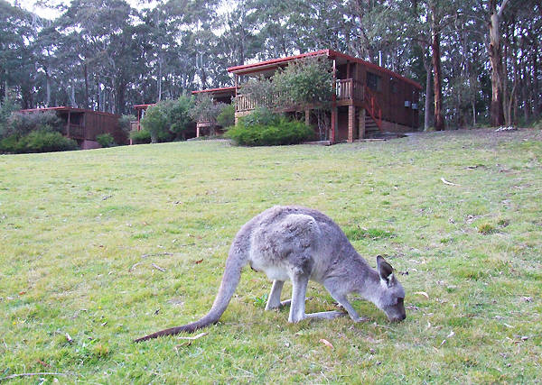 Jenolan Caves Cottages - St Kilda Accommodation