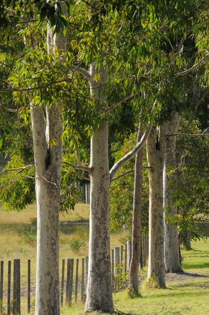 Stringybark Cottages - St Kilda Accommodation