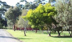 Otways Tourist Park - St Kilda Accommodation