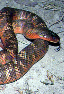 Armadale Reptile  Wildlife Centre - St Kilda Accommodation