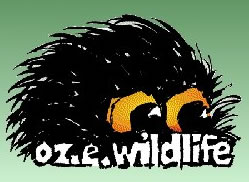 OZe Wildlife - St Kilda Accommodation
