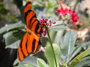 Butterfly Farm - St Kilda Accommodation