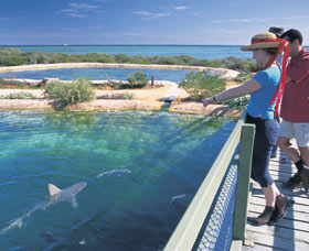 Shark Bay Marine Park - St Kilda Accommodation