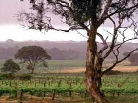 Yangarra Estate Vineyard - St Kilda Accommodation