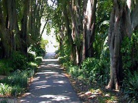 Adelaide Botanic Garden - St Kilda Accommodation
