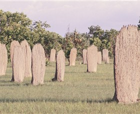 Magnetic Termite Mounds - St Kilda Accommodation