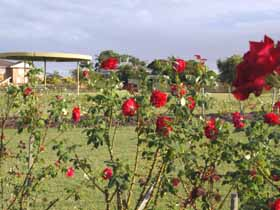 Elizabeth Park Rose Gardens - St Kilda Accommodation