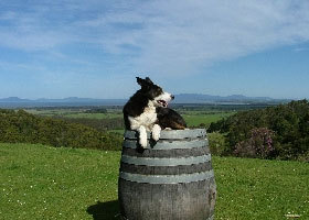 Windy Ridge Vineyard and Winery - St Kilda Accommodation