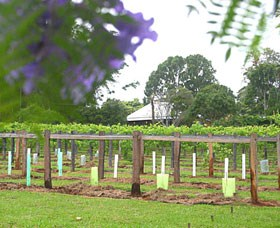 Douglas Vale Historic Homestead  Vineyard - St Kilda Accommodation