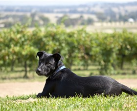 Moothi Estate Vineyard and Cellar Door - St Kilda Accommodation