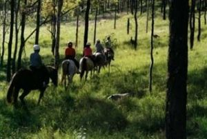 Hunter Valley Horse Riding and Adventures - St Kilda Accommodation