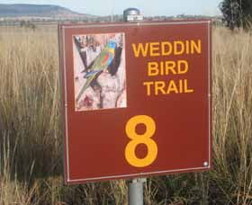 Weddin Bird Trails - St Kilda Accommodation