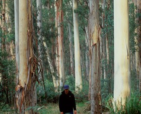 Blue Gum Forest - St Kilda Accommodation
