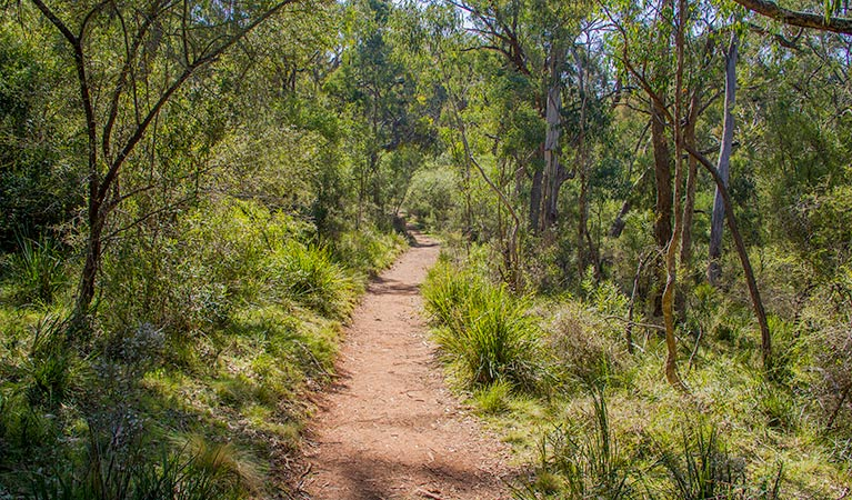 Mares Forest Creek walking track - St Kilda Accommodation
