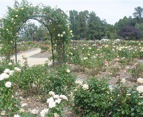 Victoria Park Rose Garden - St Kilda Accommodation
