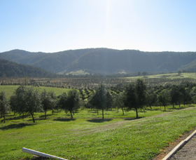 Hastings Valley Olives - St Kilda Accommodation