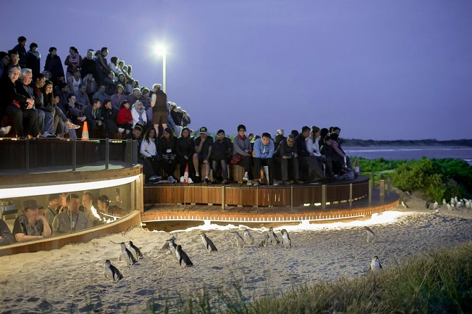 Small-Group Phillip Island and Wildlife Highlights Day Trip from Melbourne Including Penguin Plus Viewing Platform - St Kilda Accommodation