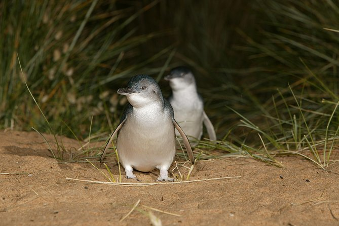 Full-Day Penguin Parade and Melbourne City Tour From Melbourne - St Kilda Accommodation