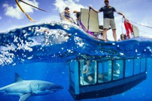 White Shark Tour with Optional Cage Dive from Port Lincoln - St Kilda Accommodation
