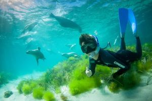 Half-Day Sea Lion Snorkeling Tour from Port Lincoln - St Kilda Accommodation
