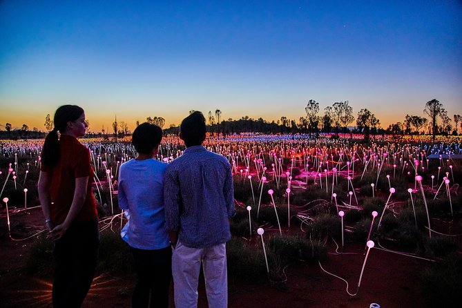 Uluru Field of Light Sunrise Tour - St Kilda Accommodation