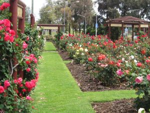 Cowra Rose Garden - St Kilda Accommodation
