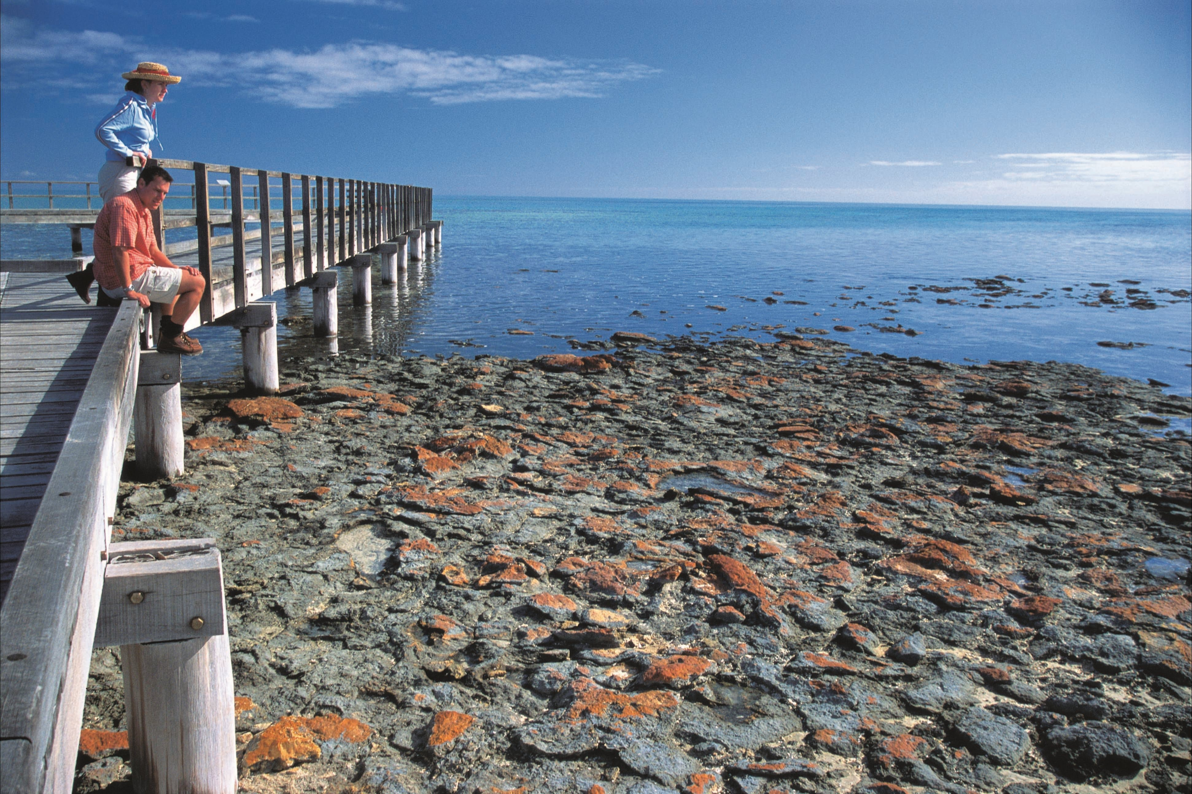 Hamelin Pool Stromatolites - St Kilda Accommodation