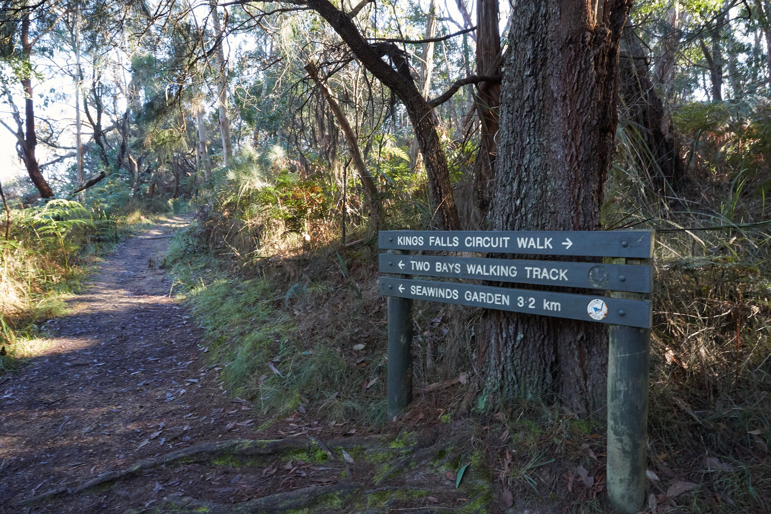 Arthurs Seat to Kings Falls Walk - St Kilda Accommodation