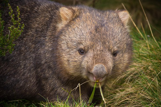 Cradle Mountain Wildlife Spotting after Dark - St Kilda Accommodation
