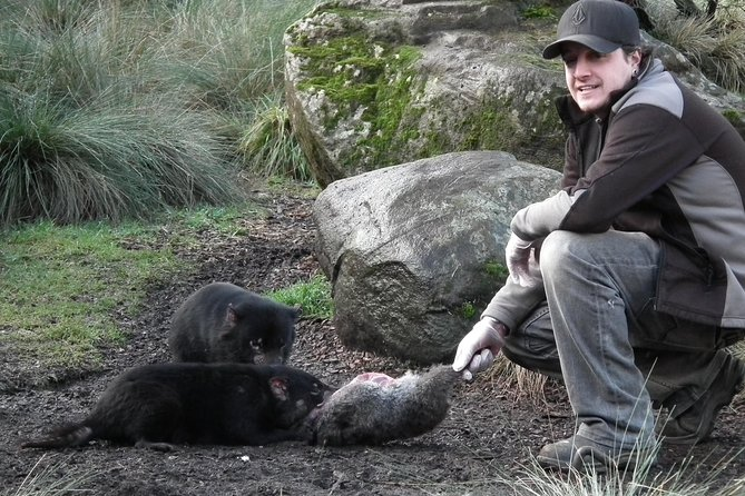 After Dark Tasmanian Devil Feeding Tour at Cradle Mountain - St Kilda Accommodation