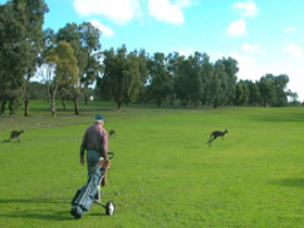 Coffin Bay Golf Club - St Kilda Accommodation