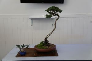 Wauchope Bonsai Workshop Group - St Kilda Accommodation