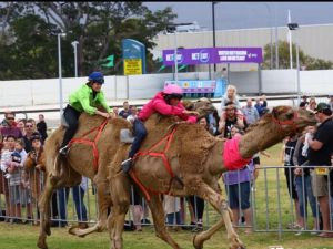 Camel Races at Gosford Showgrounds - St Kilda Accommodation