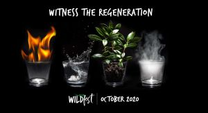 Wildfest - Annual Festival - St Kilda Accommodation