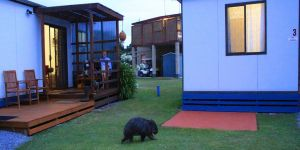 BIG4 Kelso Sands Holiday  Native Wildlife Park - St Kilda Accommodation